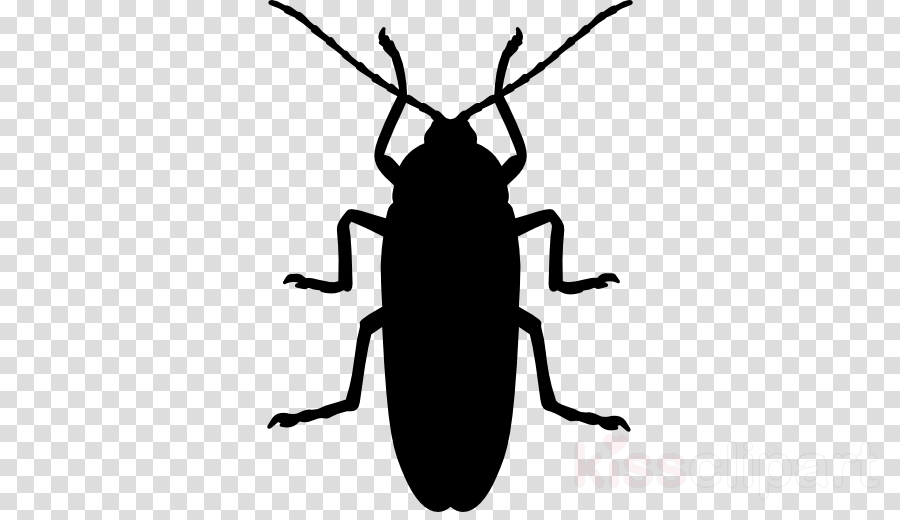Cockroach Insect Vector graphics Portable Network Graphics Silhouette