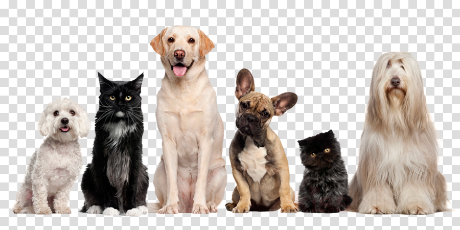 Dog grooming Cat Pet Veterinarian