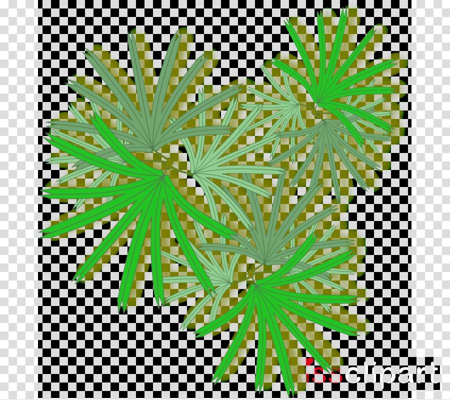 Rhapis excelsa Palm trees Portable Network Graphics Clip art Plants