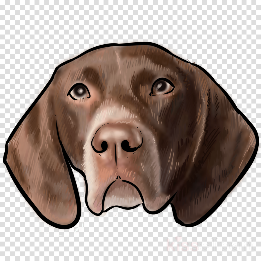 Labrador Retriever German Shorthaired Pointer Weimaraner Bloodhound