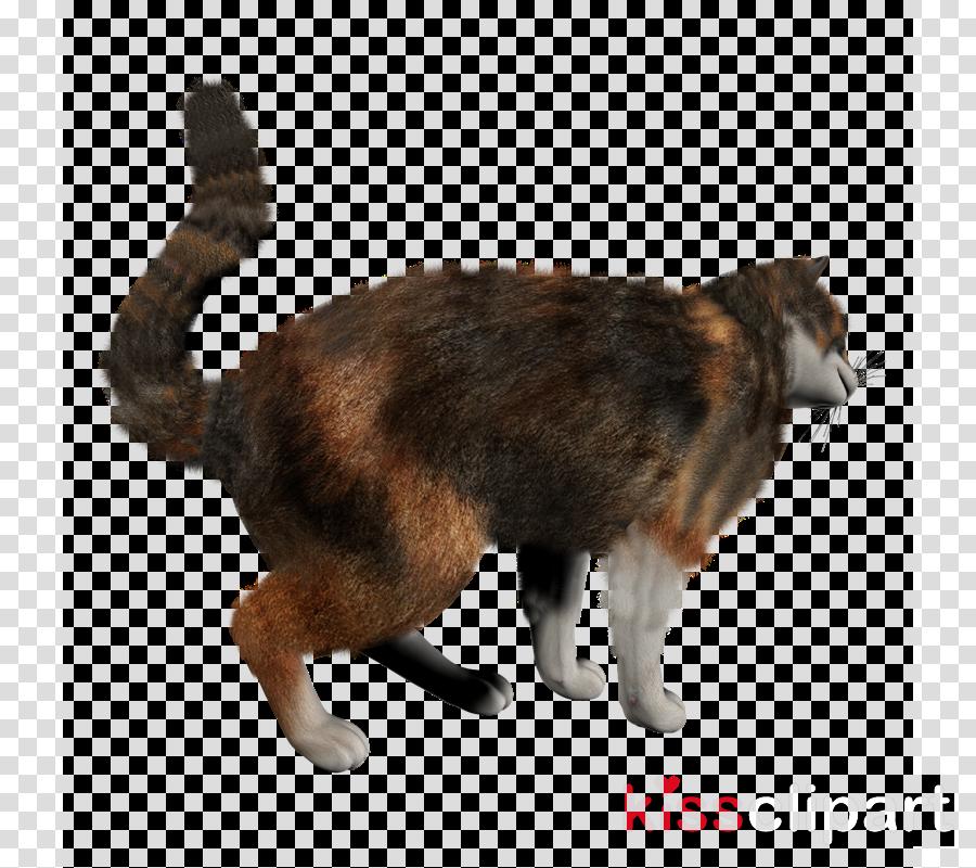 Birman European shorthair Siamese cat British Shorthair American Shorthair