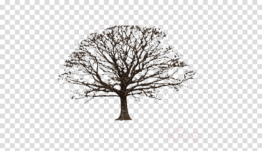 Tree Stock photography Clip art Vector graphics Portable Network Graphics
