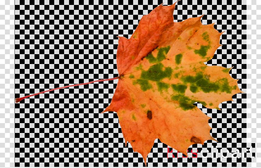 Autumn September 11 attacks Flower Floral design