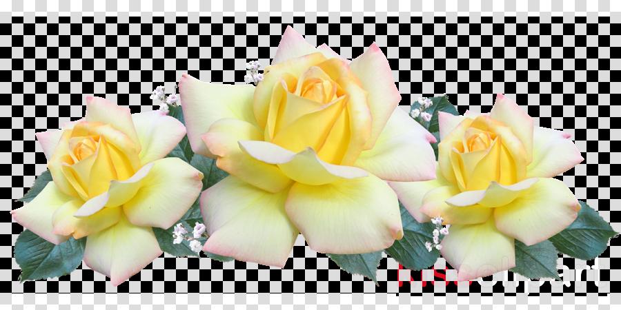 Floral design Flower bouquet Portable Network Graphics Rosa Peace