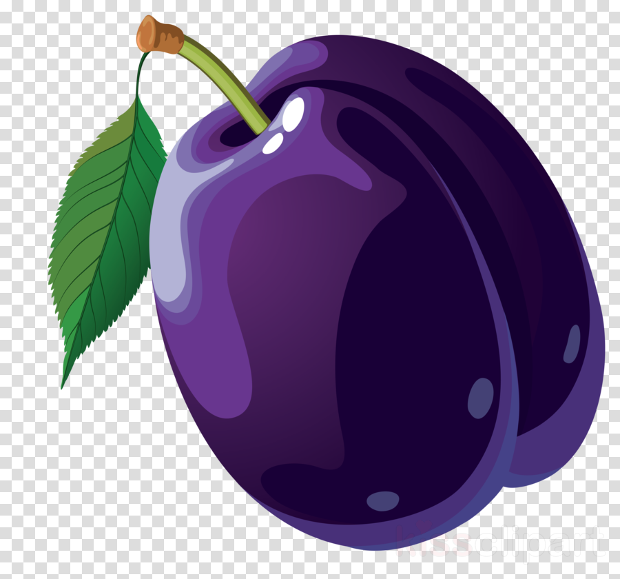 Clausena lansium Portable Network Graphics Clip art Prunus sect. Prunus Illustration