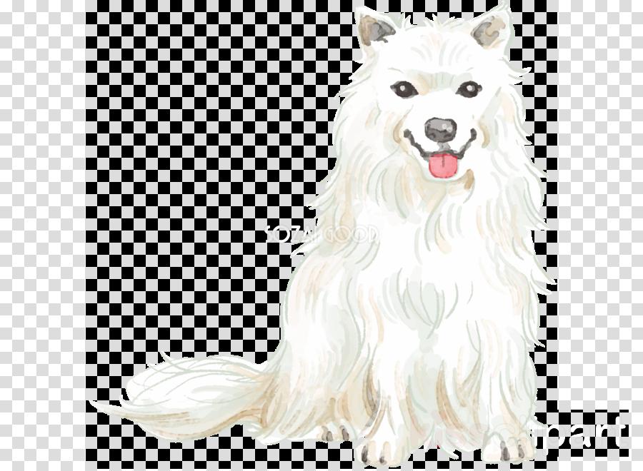 Canadian Eskimo dog Samoyed dog American Eskimo Dog Japanese Spitz Dog breed