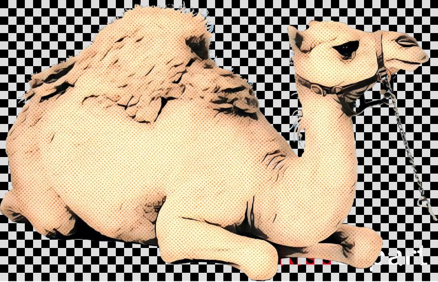 Dromedary Stuffed Animals & Cuddly Toys Neck Snout Camel