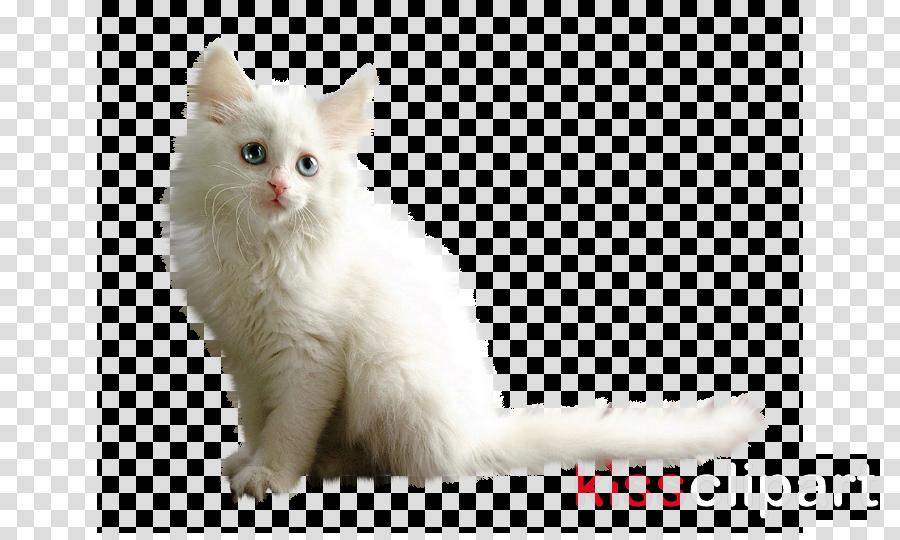 Kitten Turkish Van Turkish Angora Asian Semi-longhair Whiskers