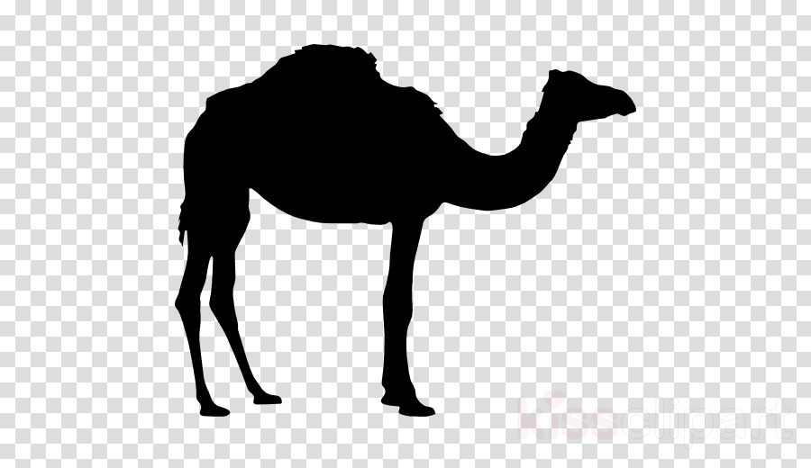 Vector graphics Silhouette Clip art Illustration Dromedary