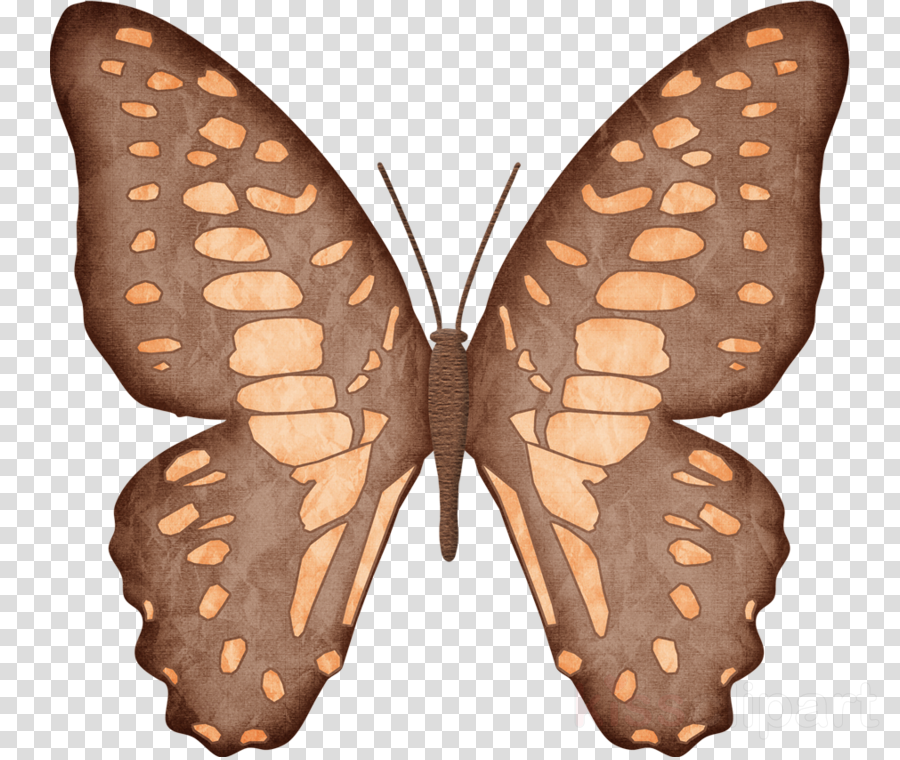 Monarch butterfly Silkworm animation Insect
