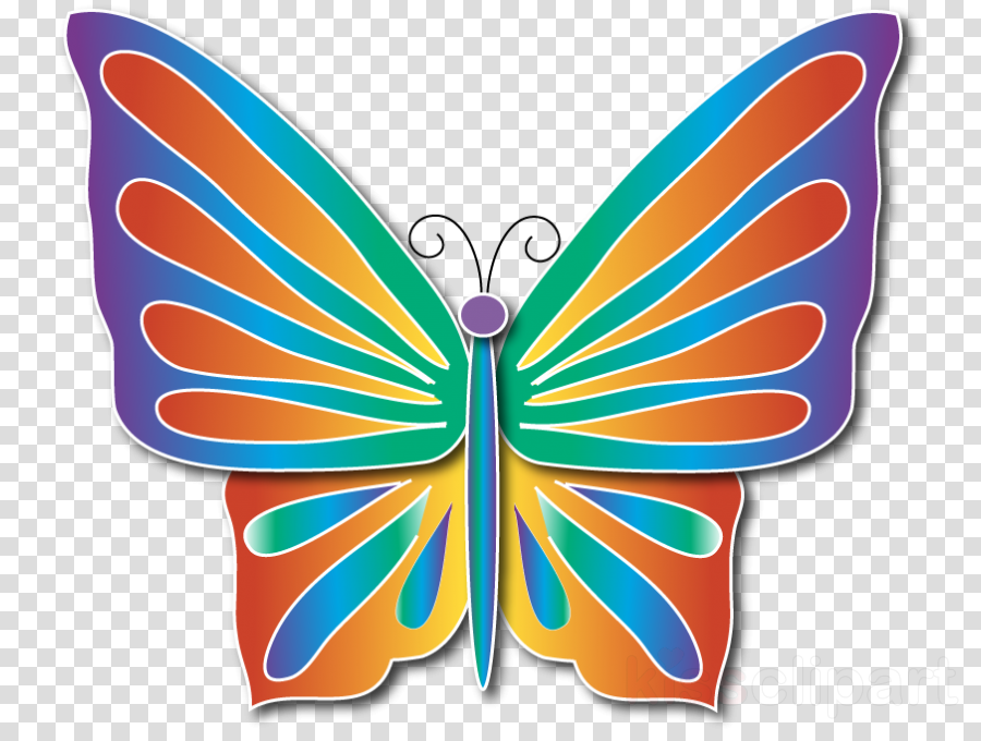 Monarch butterfly Insect Borboleta Milkweed