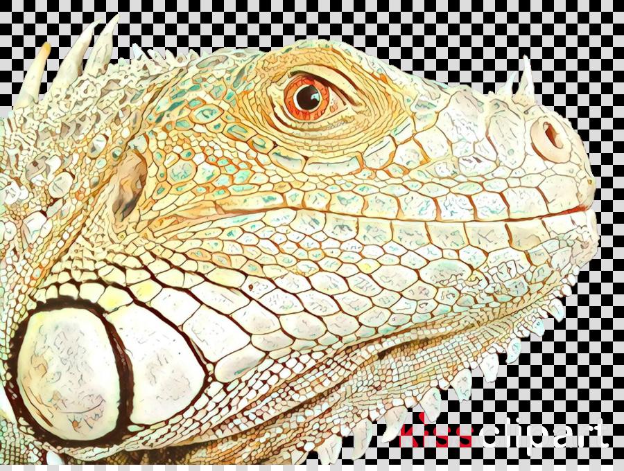 Lizard Reptile Chameleons Green iguana Animal