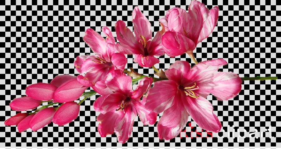 Pink Flower Image Photograph Pixabay