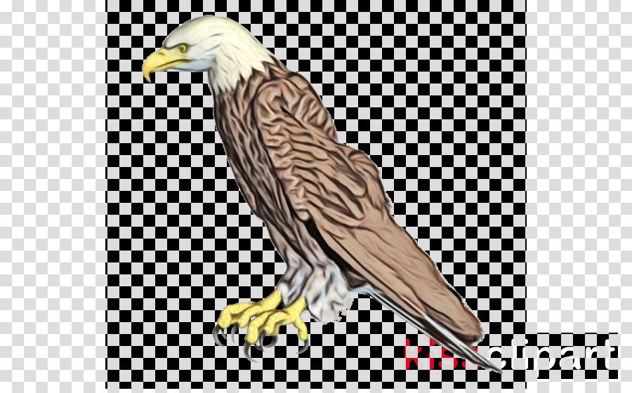 Bald eagle Bird Portable Network Graphics Art
