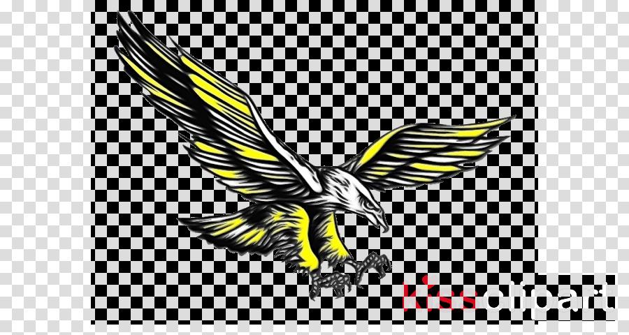 Bald eagle Hawk Beak Buzzard