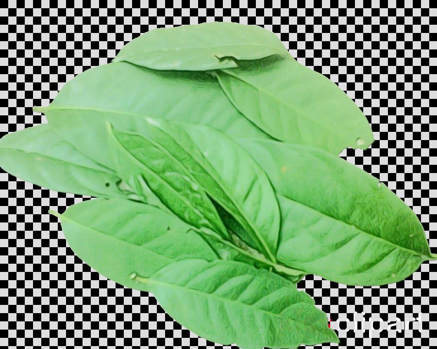 Basil Indonesian bay leaf Herb Condiment