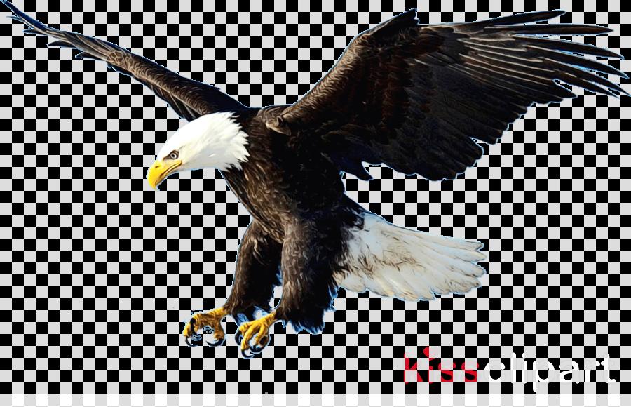 Bald eagle Portable Network Graphics Clip art Vector graphics
