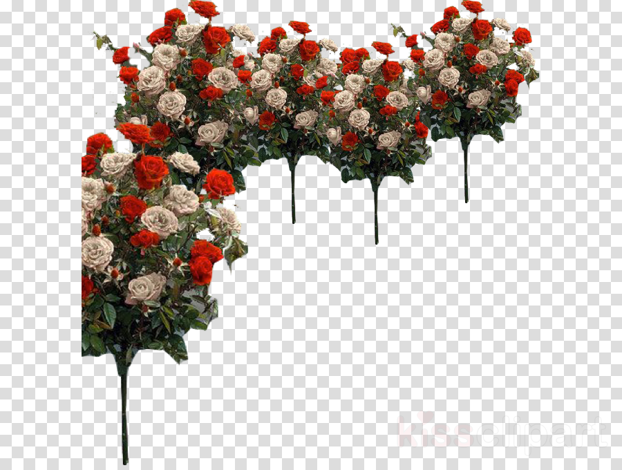 Garden roses Cut flowers Floral design
