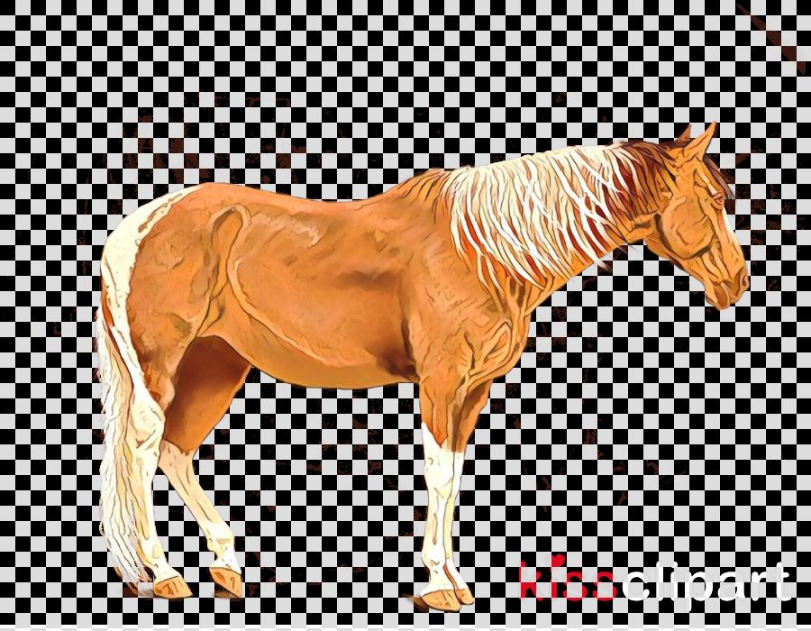 T-shirt Mule Donkey Pony American Paint Horse