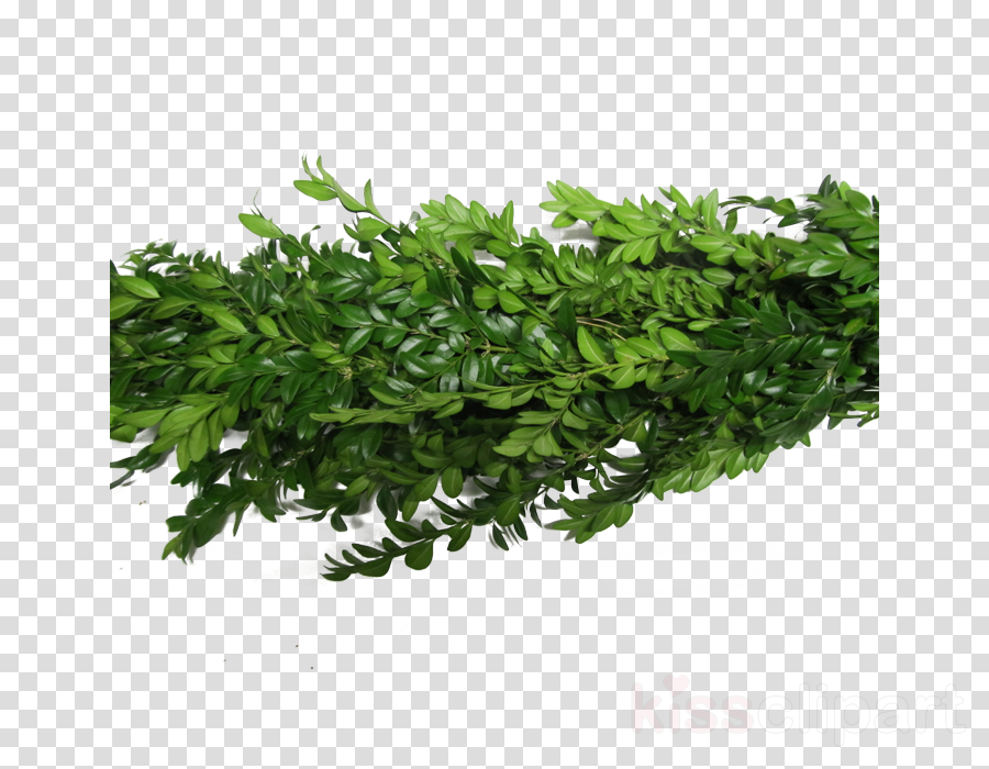 Garland, Buxus Sempervirens, Garden, transparent png image