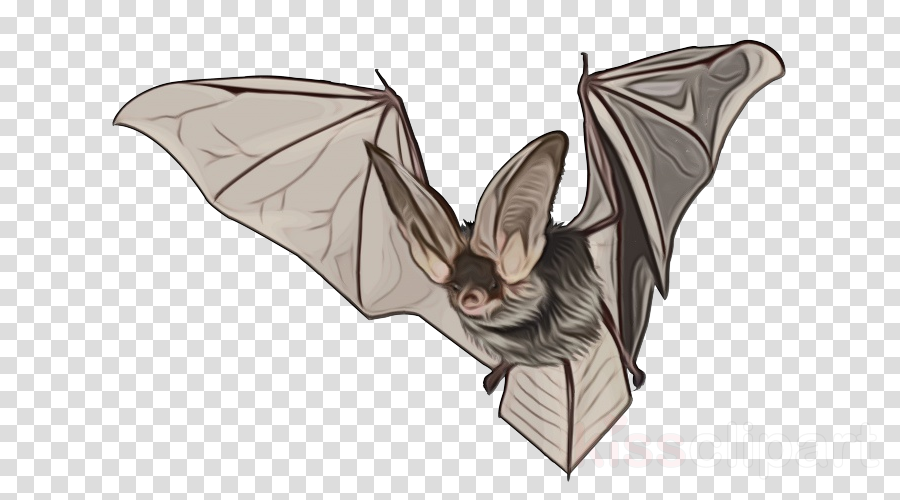 bat vampire bat little brown myotis wing