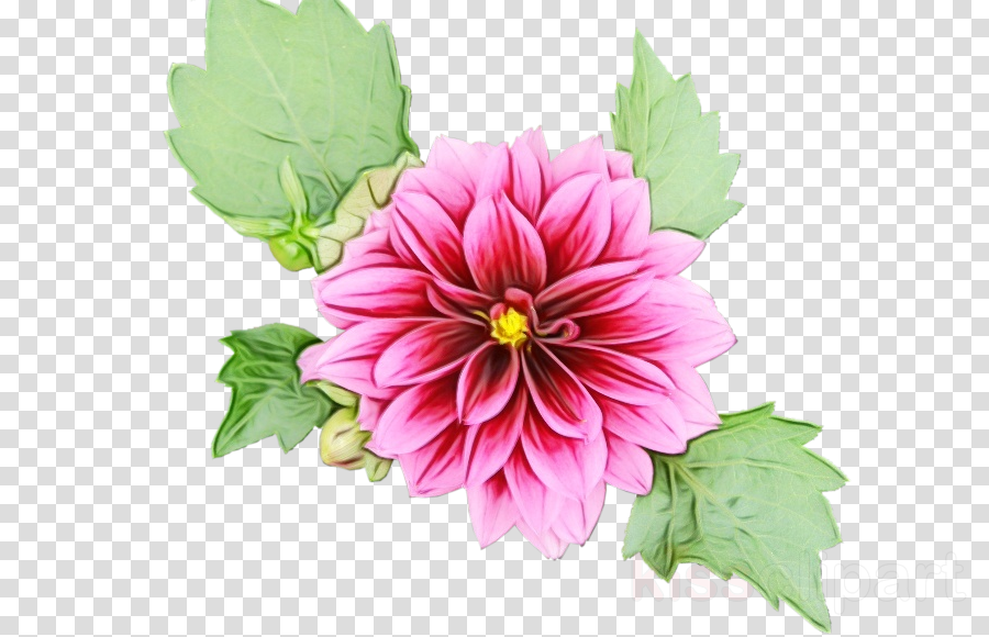 flower flowering plant petal plant pink
