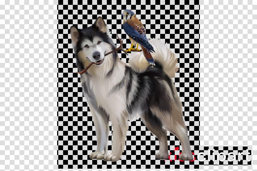 dog alaskan malamute siberian husky dog breed working dog