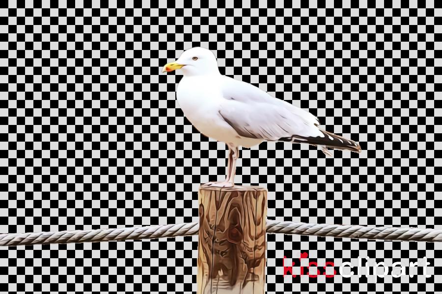 bird european herring gull gull beak seabird