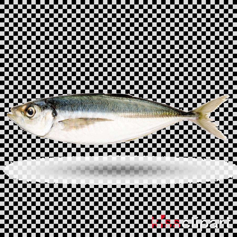 fish fish herring forage fish sardine