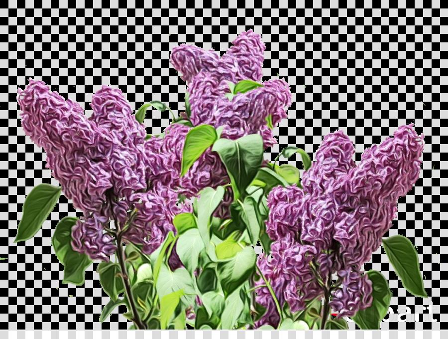 flower flowering plant plant lilac purple