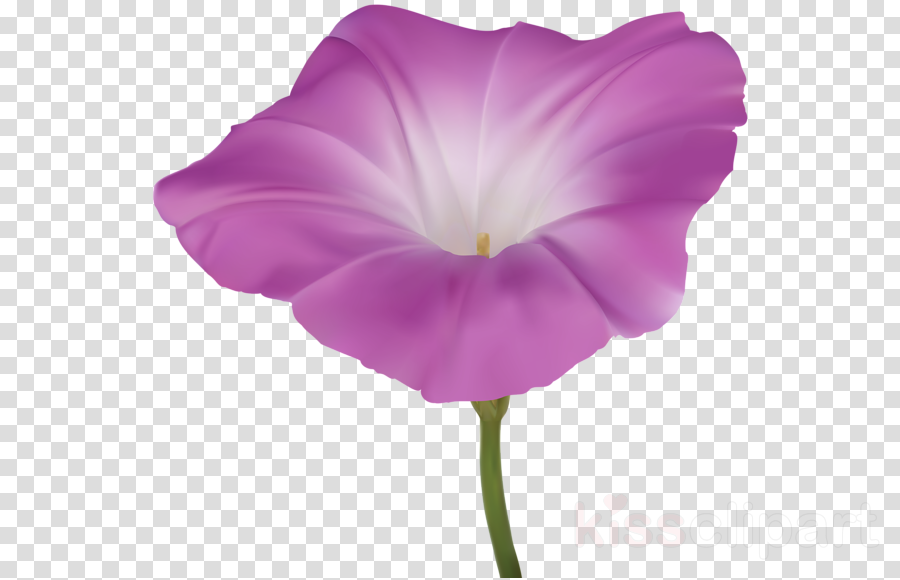 flowering plant flower petal purple violet