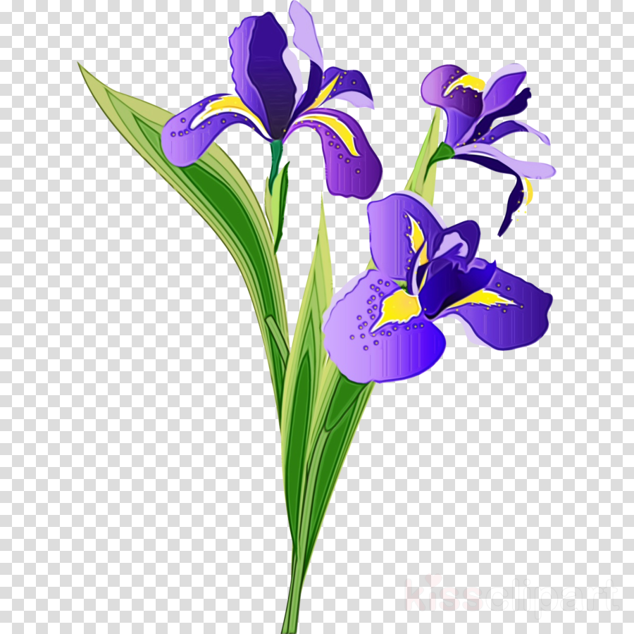 flower flowering plant violet plant purple