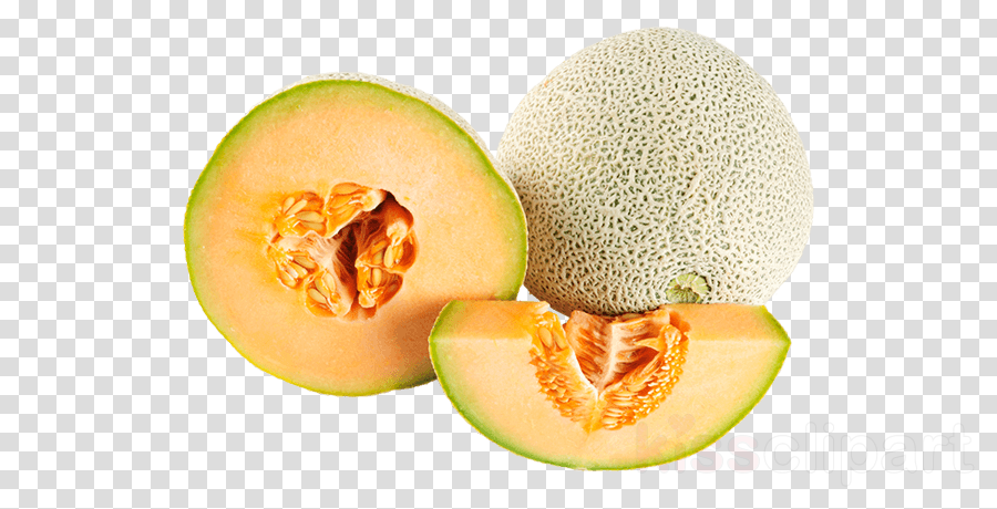 Galia Muskmelon Cantaloupe Melon Fruit Clipart Galia Muskmelon Cantaloupe Transparent Clip Art 1,720 cantaloupe clip art images on gograph. galia muskmelon cantaloupe melon fruit
