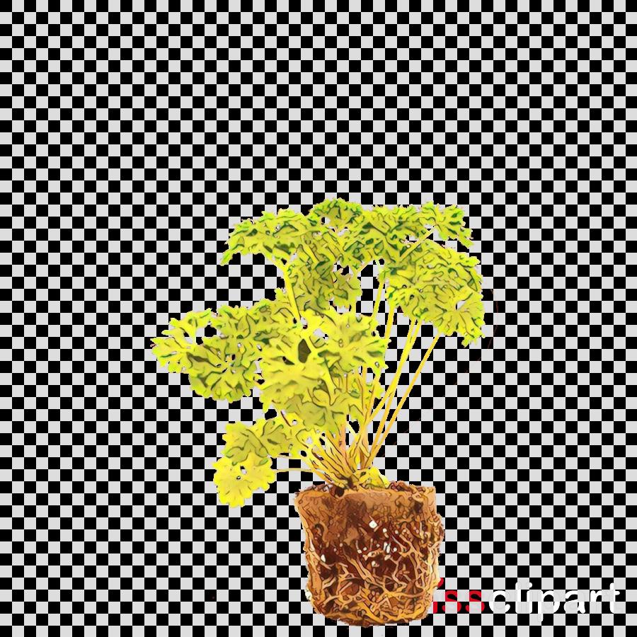 flowerpot plant flower leaf houseplant