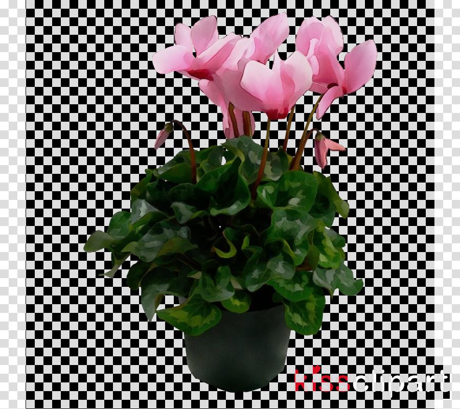 flower flowering plant plant flowerpot pink