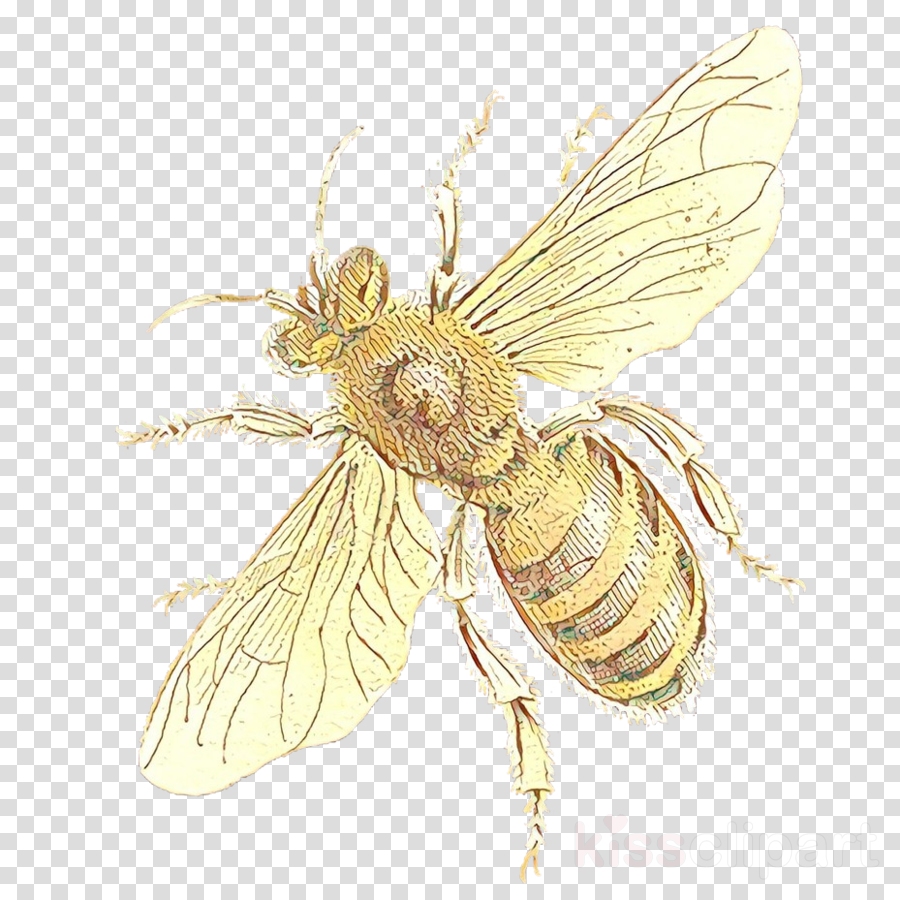 insect membrane-winged insect bee honeybee pest