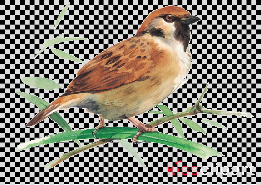 bird sparrow house sparrow beak emberizidae