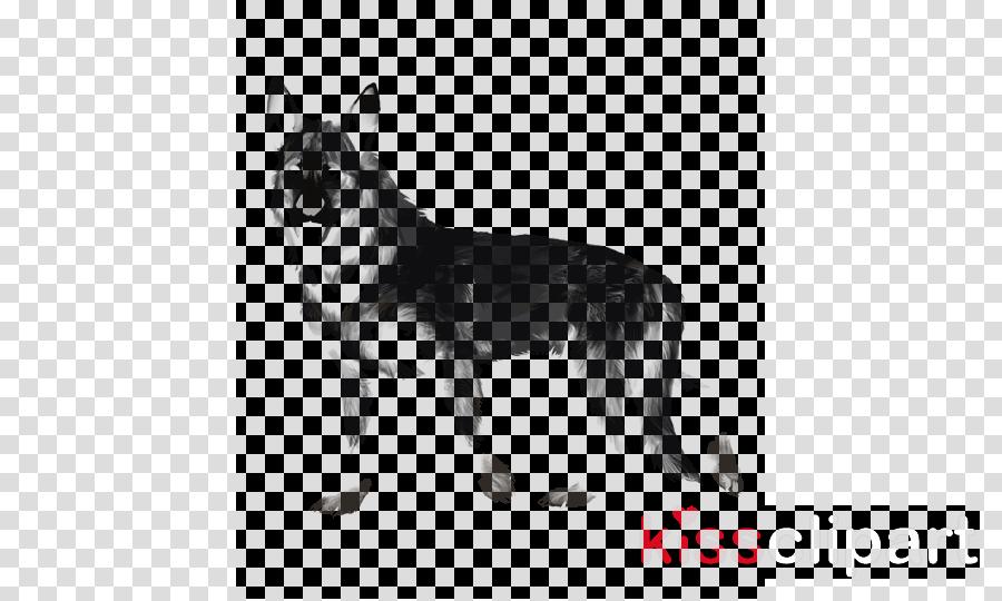 dog dog breed native american indian dog wolfdog german shepherd dog
