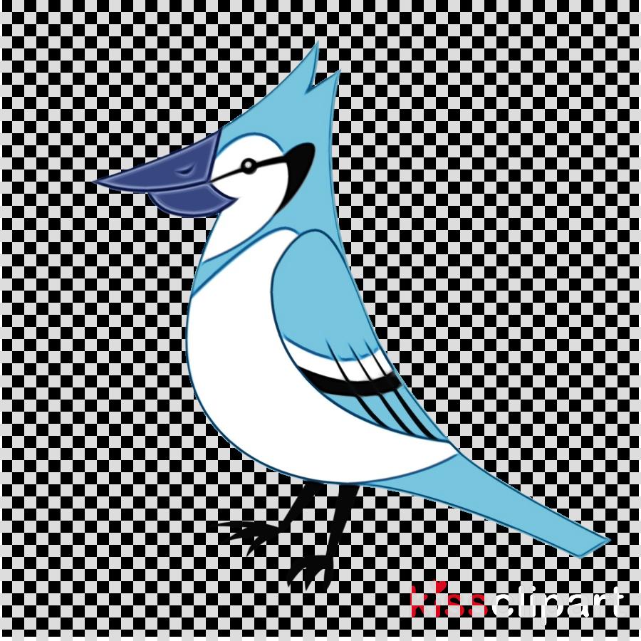 bird blue jay beak jay songbird