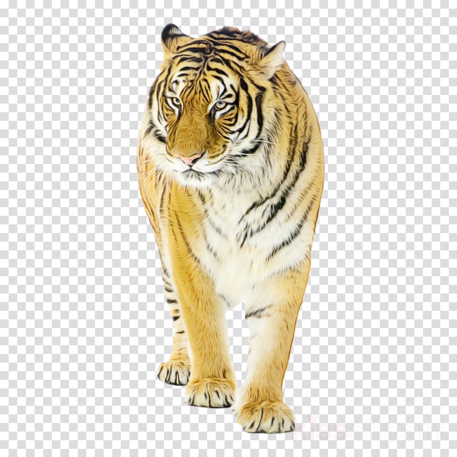 tiger bengal tiger siberian tiger animal figure wildlife
