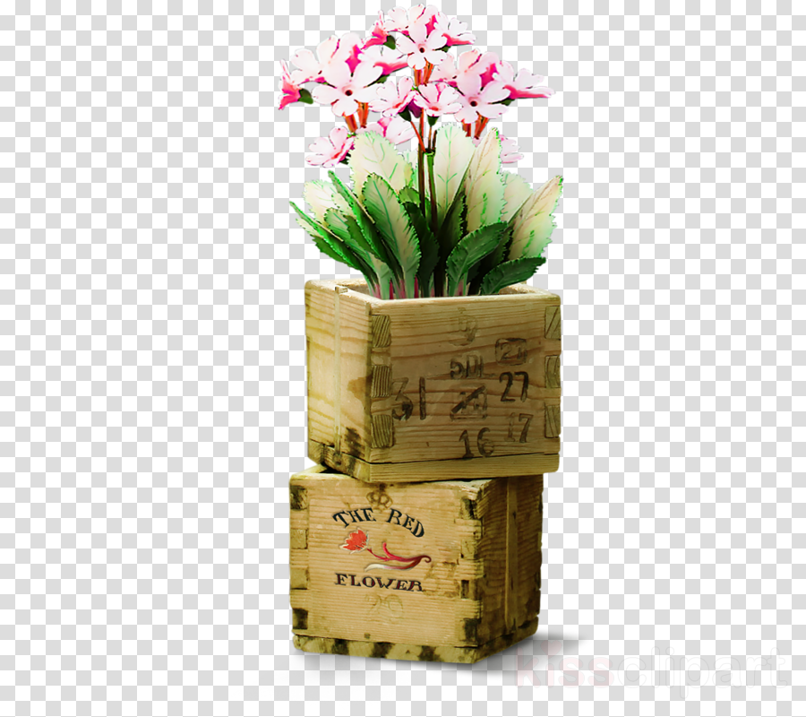 flower plant flowerpot cut flowers houseplant