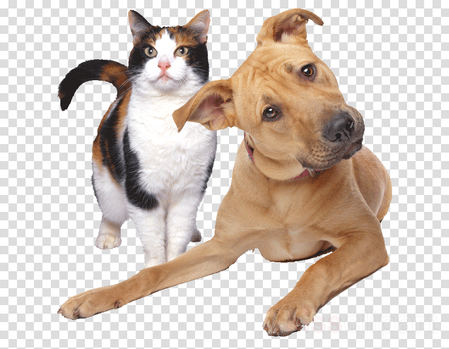 dog breed dog cat american pit bull terrier snout
