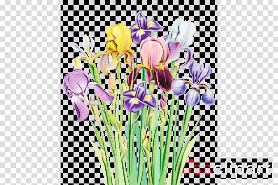 flower flowering plant plant petal iris