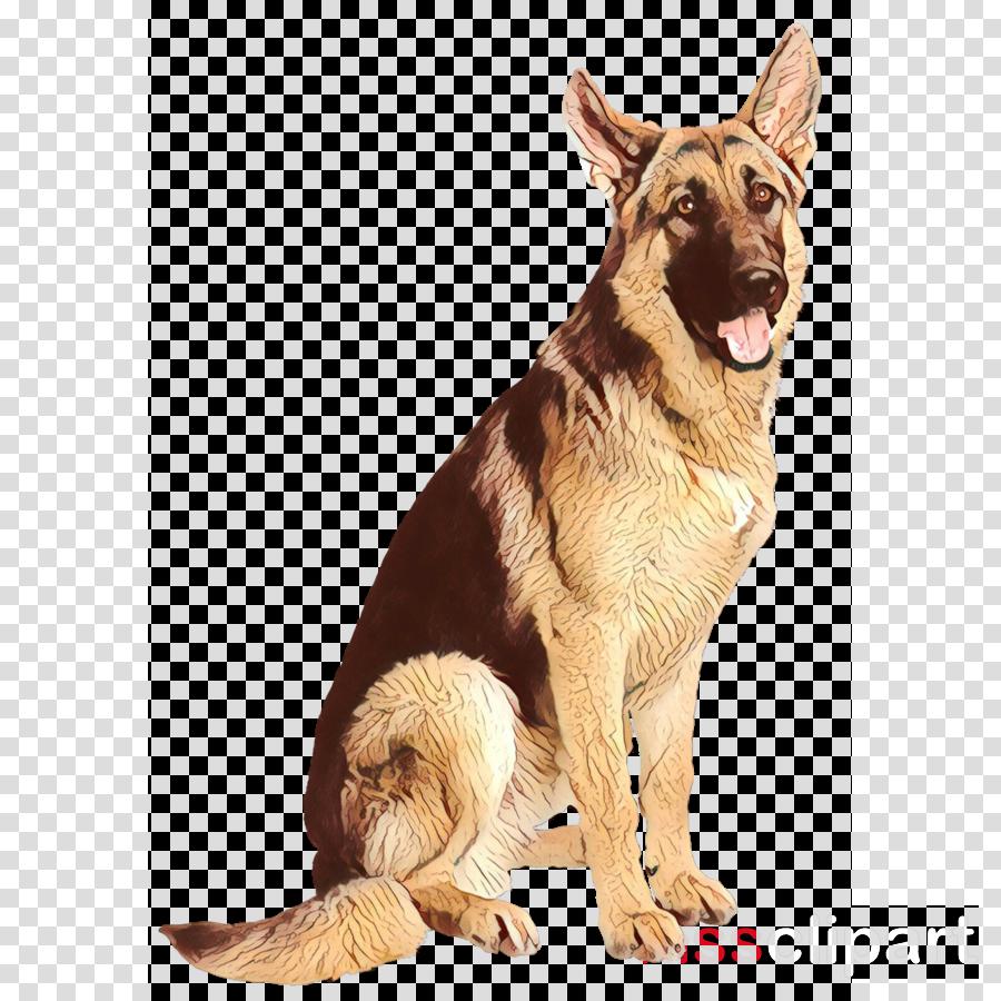 dog german shepherd dog dog breed king shepherd old german shepherd dog