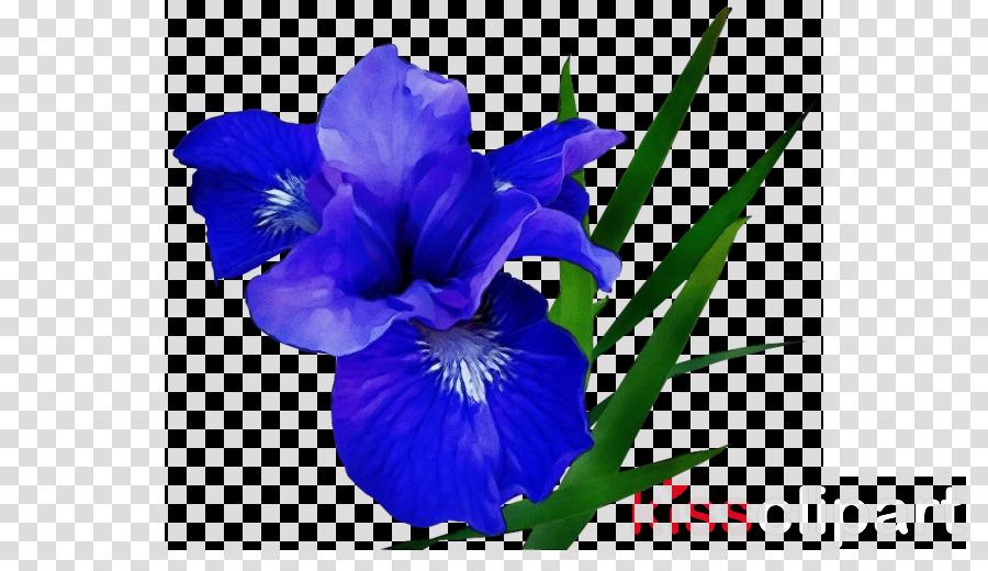 flowering plant flower blue petal purple