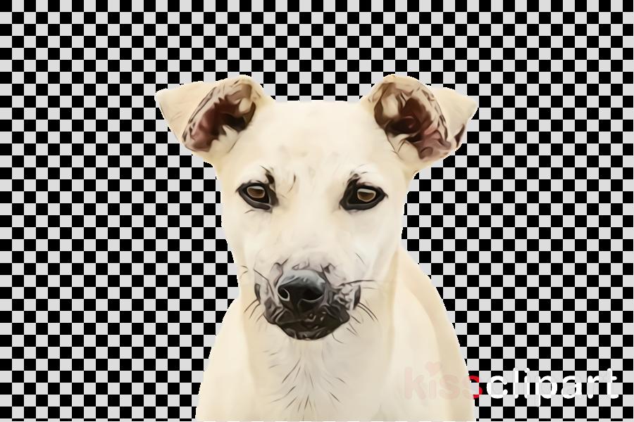 dog breed dog companion dog snout rare breed (dog)