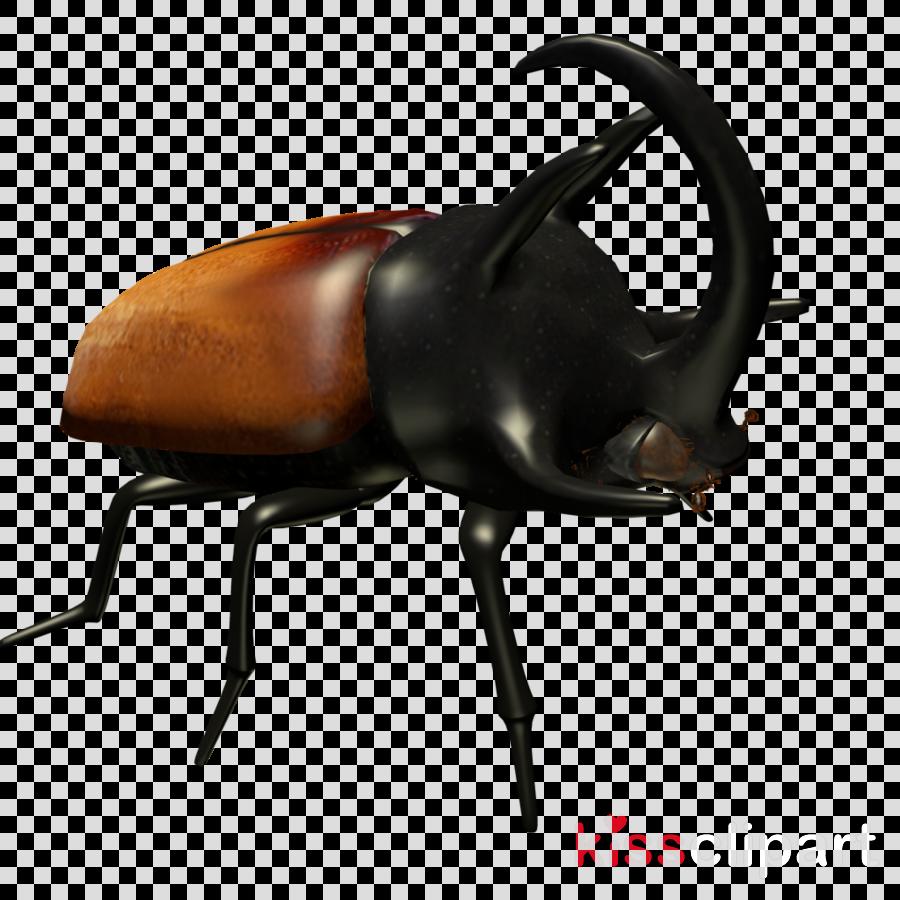 insect japanese rhinoceros beetle horn elephant beetle beetle