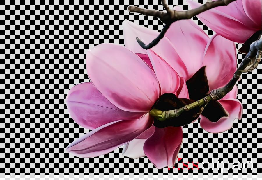 flower pink petal plant flowering plant