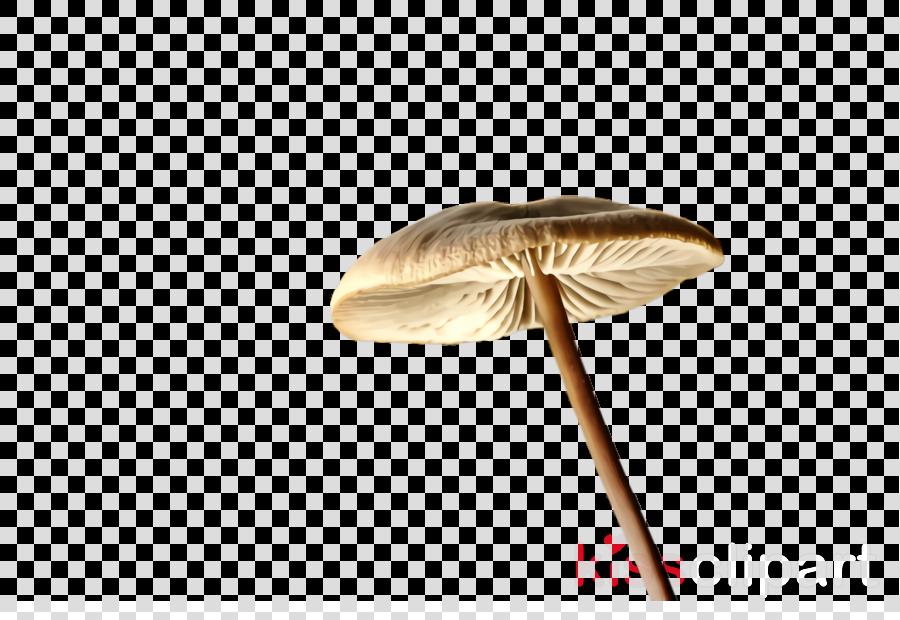 mushroom beige agaricaceae edible mushroom agaricomycetes