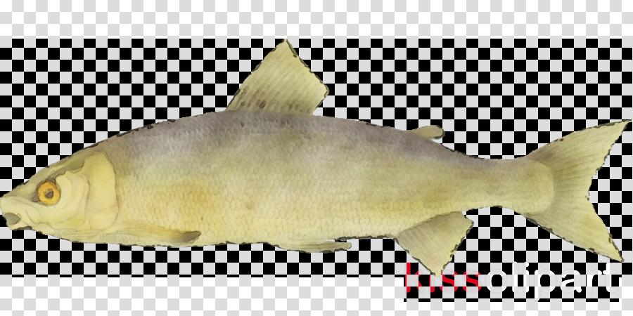 fish fish fin perch cod